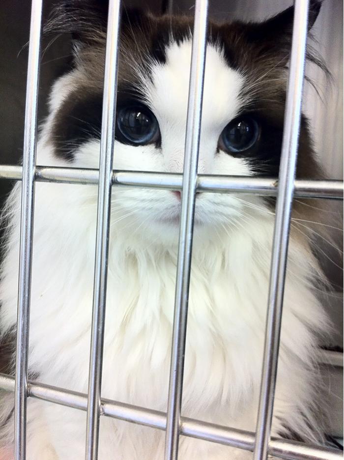10+ Pisici superbe, in poze de colectie - Poza 1