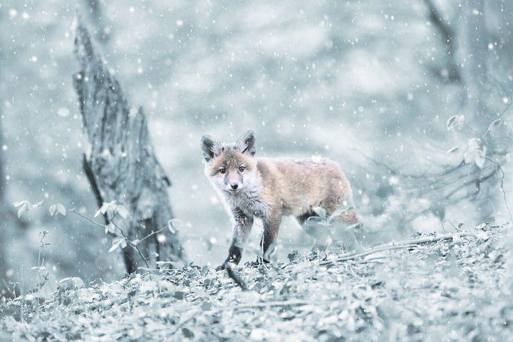 Cele mai frumoase ipostaze ale iernii, in poze sublime - Poza 9