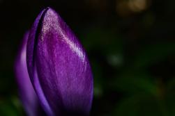 Psihologia culorilor: Cum ne influenteaza acestea viata zilnica - Poza 7