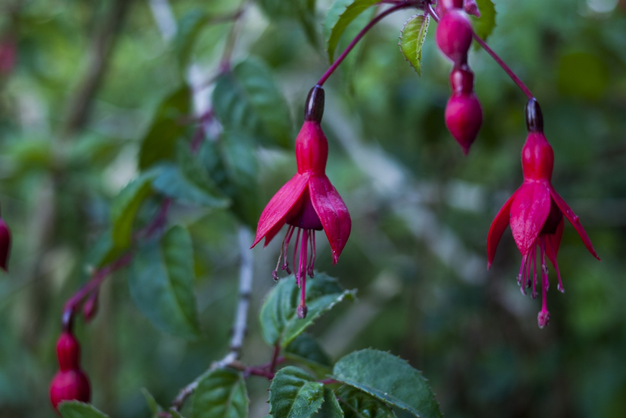 Cele mai frumoase flori din lume, intr-un pictorial de exceptie - Poza 14