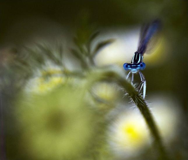 Natura la control, in 40 de poze - Poza 28