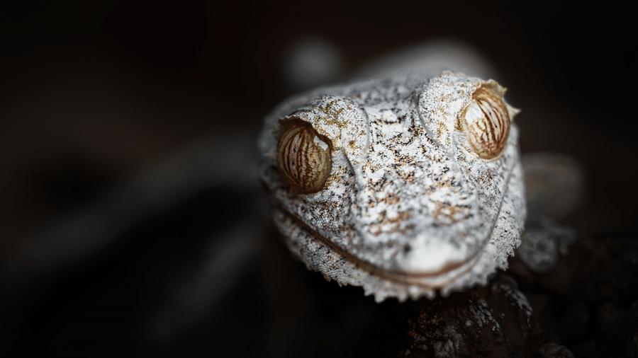 Frumusetea salbaticiei din Madagascar, in poze uluitoare - Poza 3