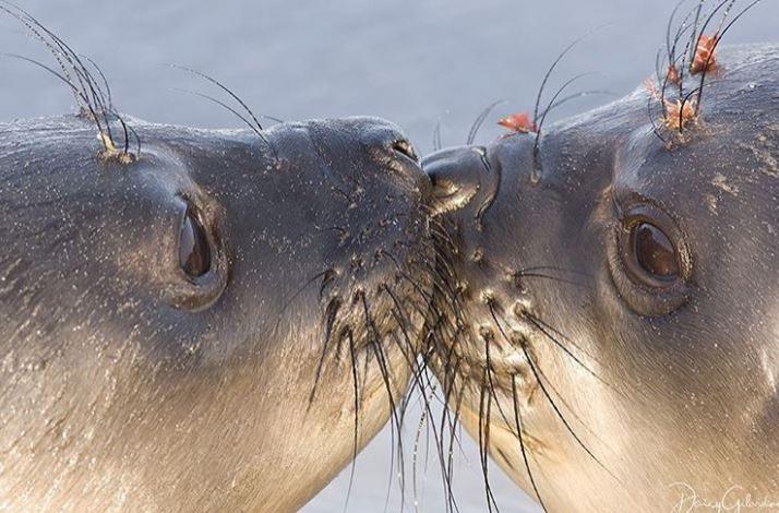 Cele mai simpatice animalute de la Polul Nord, in poze adorabile - Poza 20