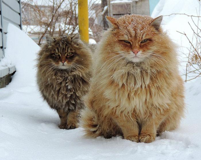 10+ Pisici superbe, in poze de colectie - Poza 8