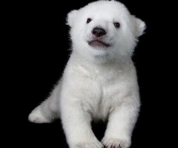 Luna, cea mai simpatica ursoaica