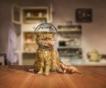 Povesti cu animalute haioase, in poze suprarealiste