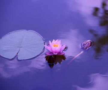 Cum se vede fericirea prin ochii unui lider spiritual budist