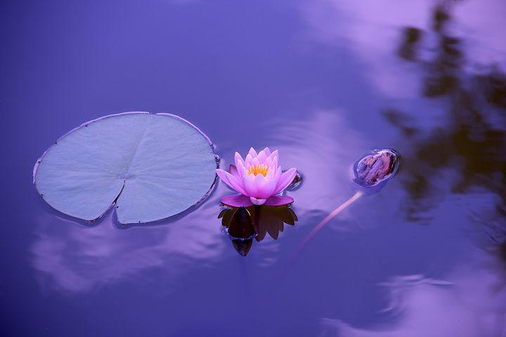 Cum se vede fericirea prin ochii unui lider spiritual budist - Poza 1
