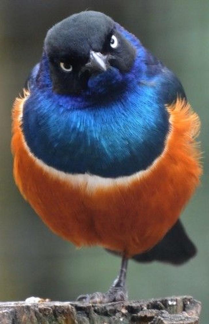 Cele mai expresive animale, in imagini haioase - Poza 15