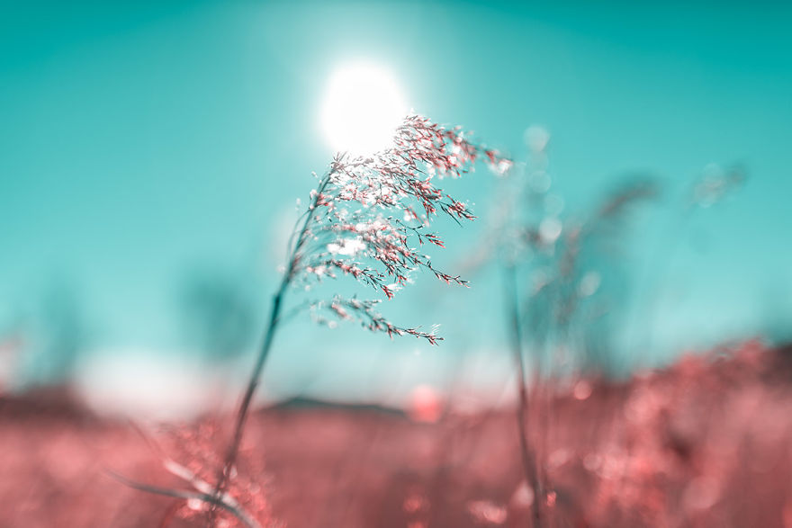 Lumea in infrarosu, intr-un set de fotografii superbe - Poza 20