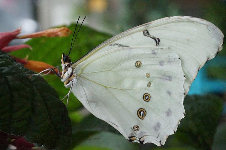 Cei mai frumosi fluturi din lume, in poze spectaculoase - Poza 18