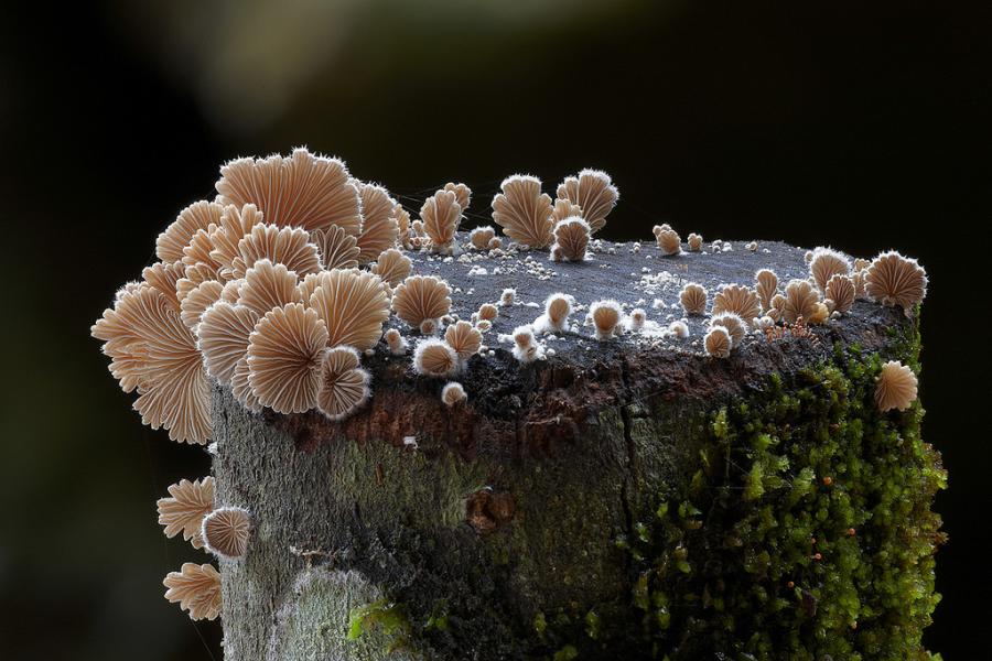 10+ Ciuperci fantastice, in poze ireal de frumoase - Poza 6