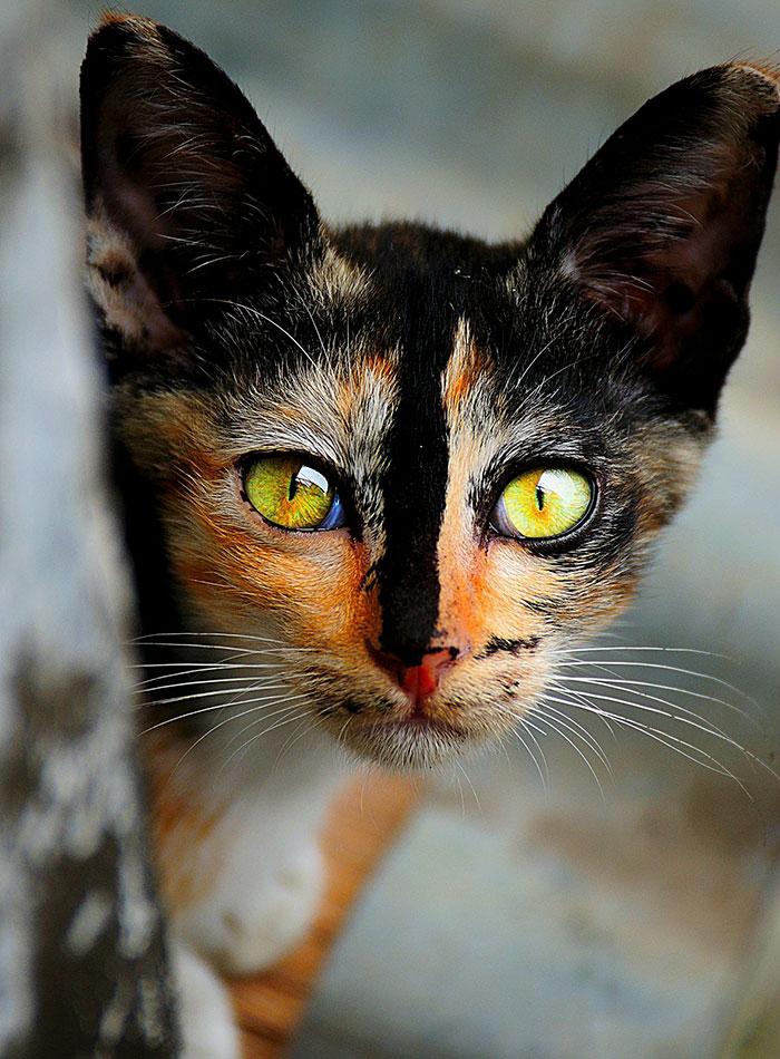 10+ Pisici superbe, in poze de colectie - Poza 10