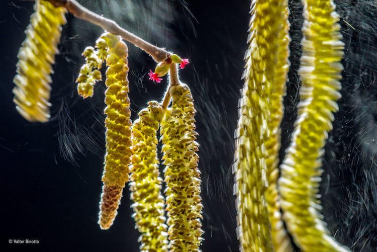 Maretia vietii in salbaticie, in poze de colectie - Poza 9