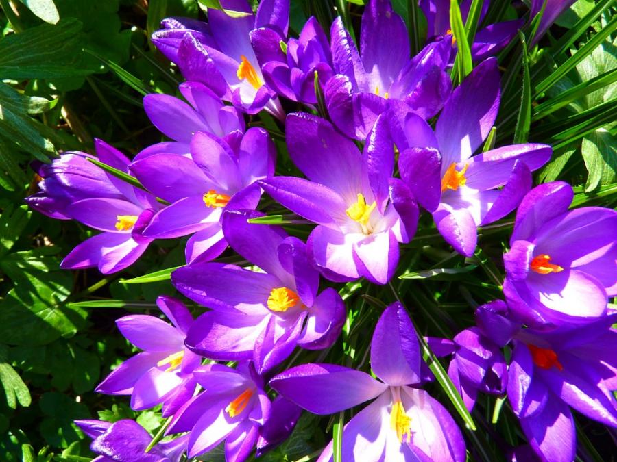 Cele mai frumoase citate despre flori - Poza 3