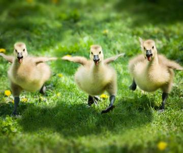 15 poze despre prietenia dintre animale