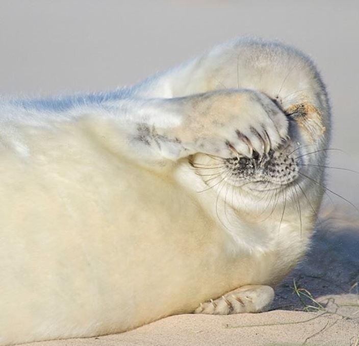 Cele mai simpatice animalute de la Polul Nord, in poze adorabile - Poza 19