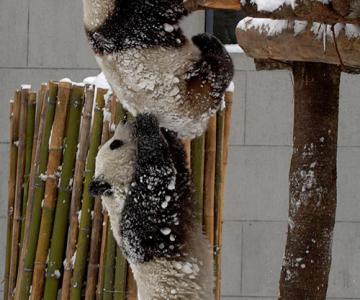 33+1 poze: Animale adorabile prin zapada