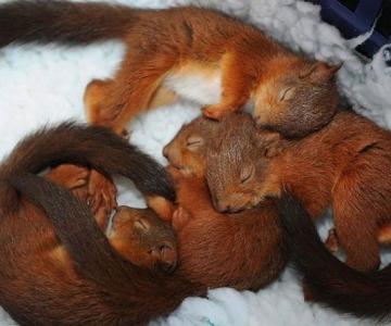 Animalute care dorm unele pe altele