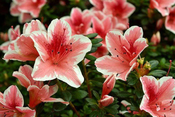 Gingasia florilor de primavara in poze superbe - Poza 5