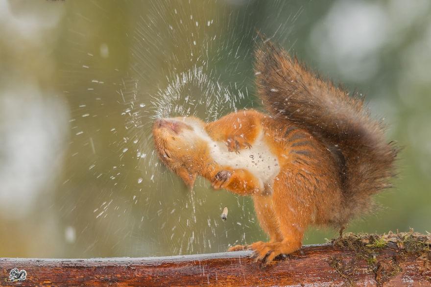 Frumoasa poveste cu veverite roscate, intr-un pictorial adorabil - Poza 13