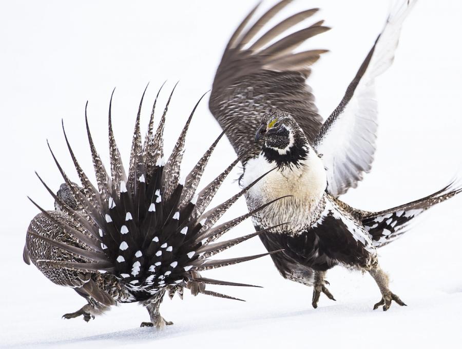 Audubon 2019: Splendoarea pasarilor, in cele mai frumoase fotografii - Poza 6