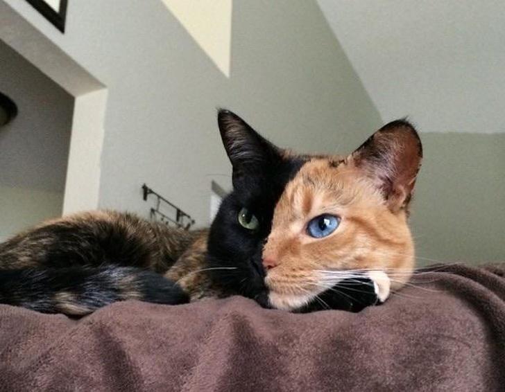 13 exemple de pisici cu infatisare atipica - Poza 13