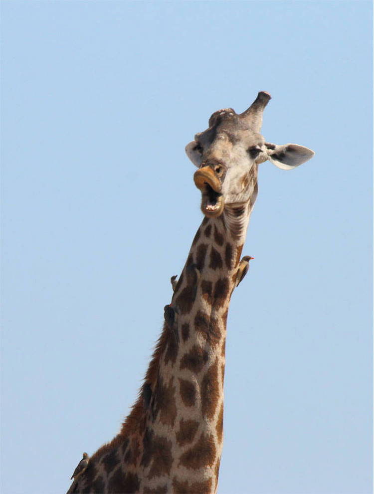 Premiile Comedy Wildlife: Poze amuzante cu animale salbatice - Poza 2