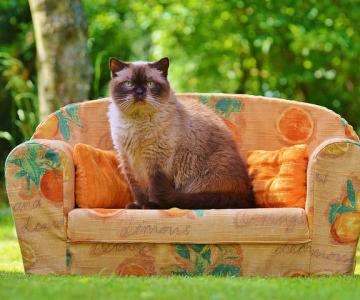 Ce face orice posesor de pisica in secret