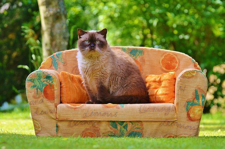 Ce face orice posesor de pisica in secret - Poza 1