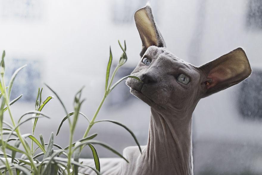 Animale colturoase, de Aditya - Poza 4