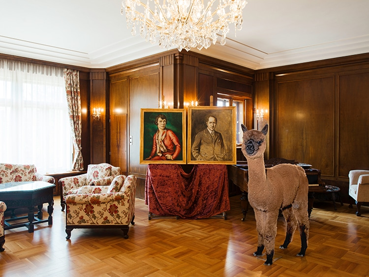 Cele mai zambarete animale din lume, in circumstante elegante - Poza 7