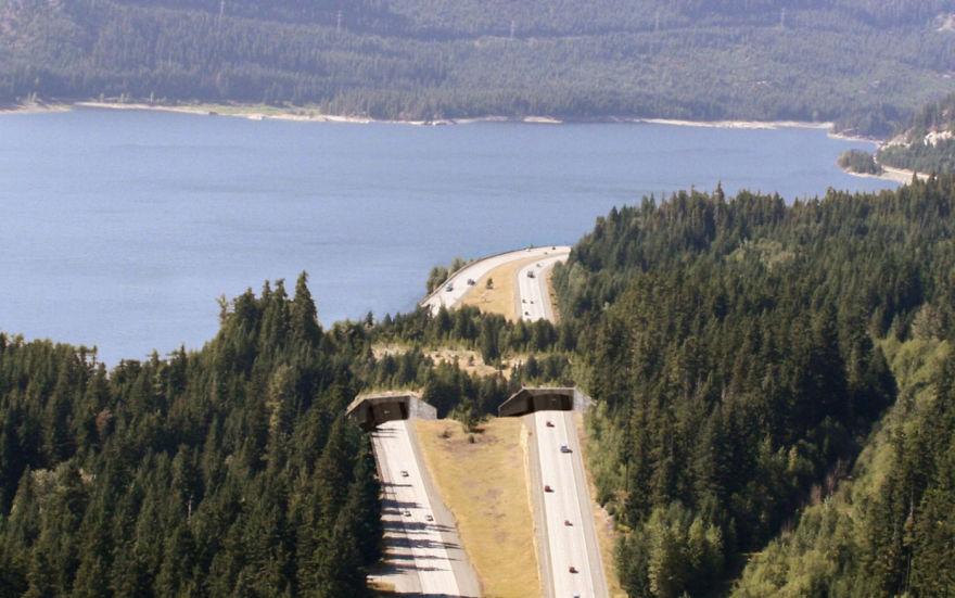 Poduri speciale pentru vietuitoarele salbatice - Poza 14