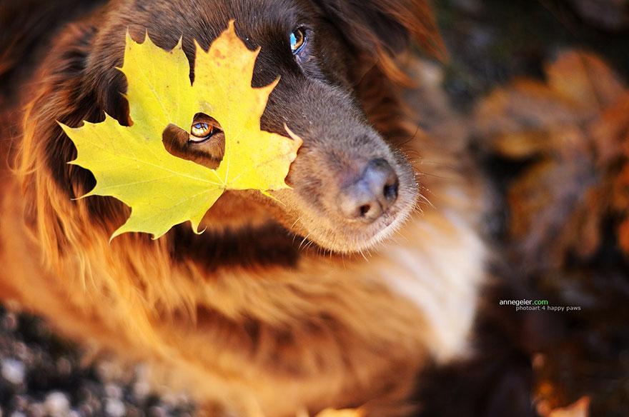 Portrete autumnale de suflet, de Anne Geier - Poza 4