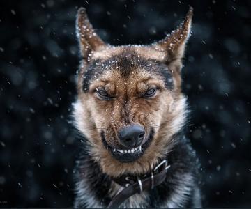 Portrete superbe de animale, de Sergey Polyushko