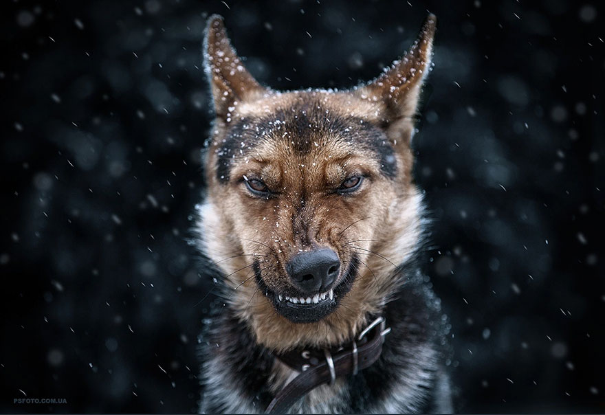 Portrete superbe de animale, de Sergey Polyushko - Poza 1