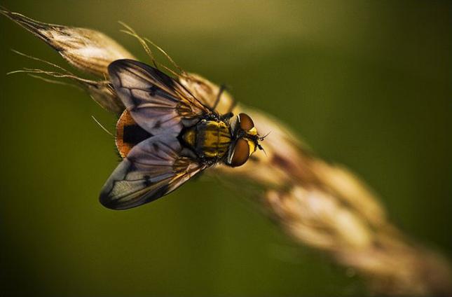 Natura la control, in 40 de poze - Poza 12
