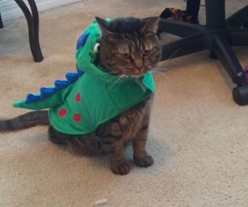20+ Pisici costumate de Halloween, in poze hilare