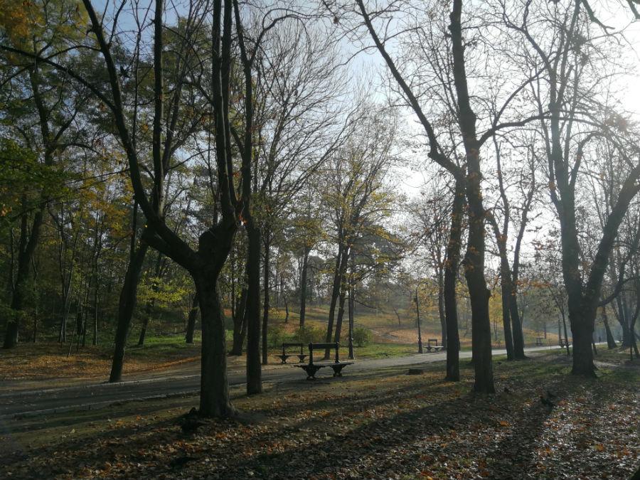 Parcul Nicolae Romanescu: Minunea verde din Banie, in poze superbe - Poza 15