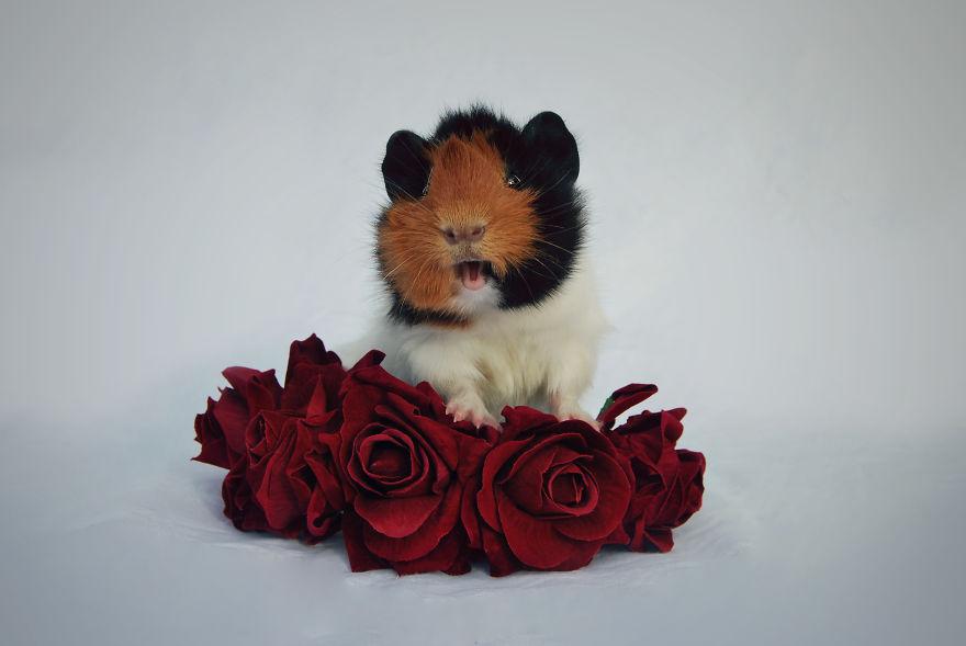 Cele mai simpatice animalute, intr-un pictorial superb - Poza 6
