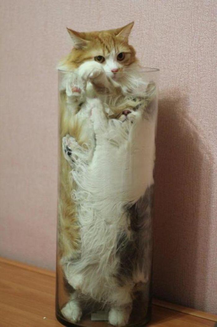 20+ Pisici contorsioniste, in poze haiose - Poza 4