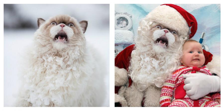 Cele mai haioase poze prelucrate in Photoshop - Poza 7
