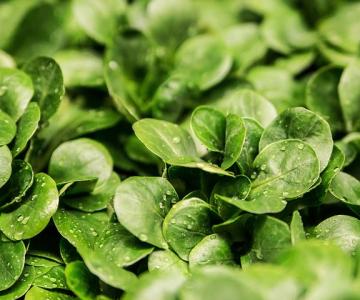 Pentru masa de Revelion: 10 Alimente care iti aduc noroc in noul an