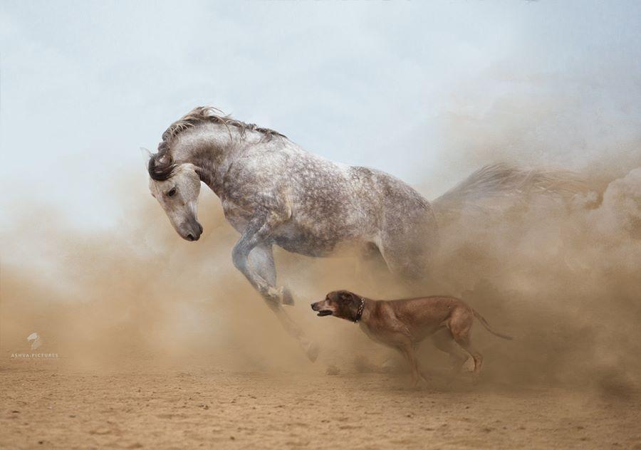 Imagini impresionante din lumea in care traim - Poza 10