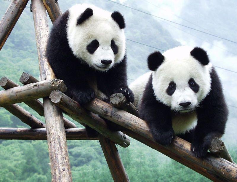 Cele mai dragute animale din lume, intr-un pictorial adorabil - Poza 9