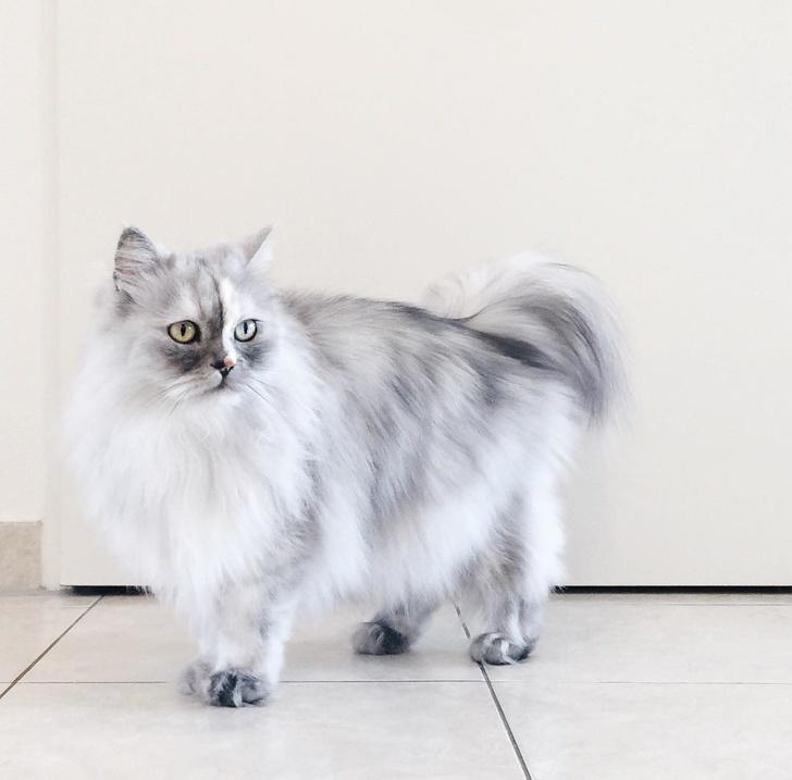 13 exemple de pisici cu infatisare atipica - Poza 10