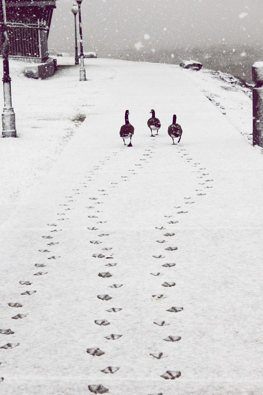 Cele mai frumoase peisaje de iarna - Poza 20