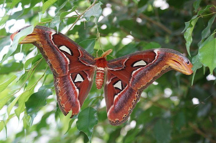 Cei mai frumosi fluturi din lume, in poze spectaculoase - Poza 26