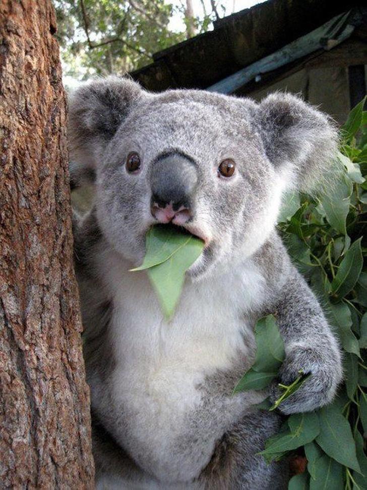 Cele mai expresive animale, in imagini haioase - Poza 3