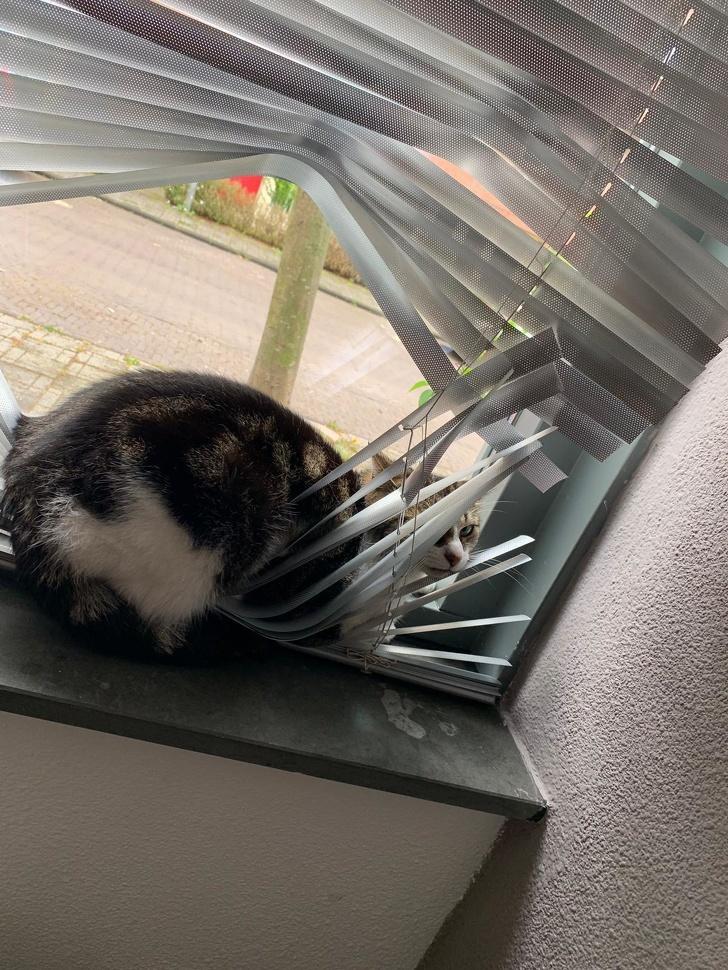 Pisici puse pe rele, in poze haioase - Poza 9